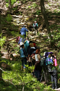 Hiking the Bruce Trail along the Niagara Escarpment